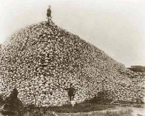 Killing the Buffalo