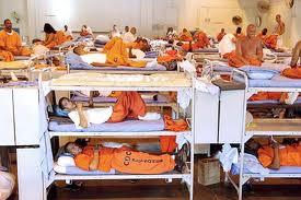 Prison Cattle